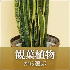 観葉植物から選ぶ